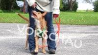 Targettraining für Hunde: Fußtouch - Hey-Fiffi.com