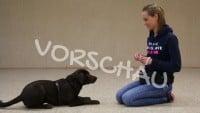"""Signal """"Platz"""" für Hunde - Hey-Fiffi.com"""