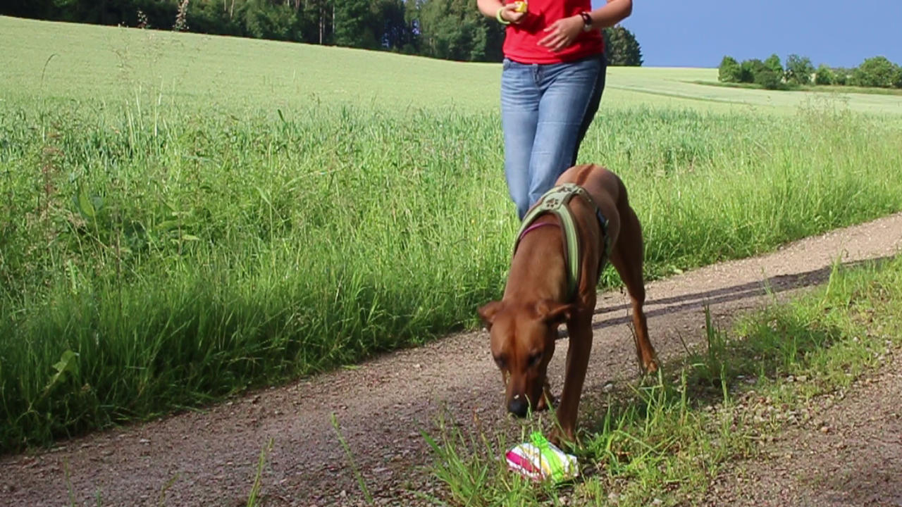"Anti-Giftköder-Training: Das Signal ""Nix da!"" - Hey-Fiffi.com"