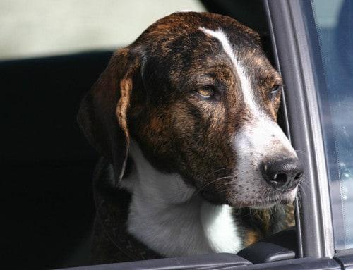Hunde und Autobahnraststätten