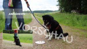 Anti-Giftköder-Training: Anzeigeverhalten - Hey-Fiffi.com