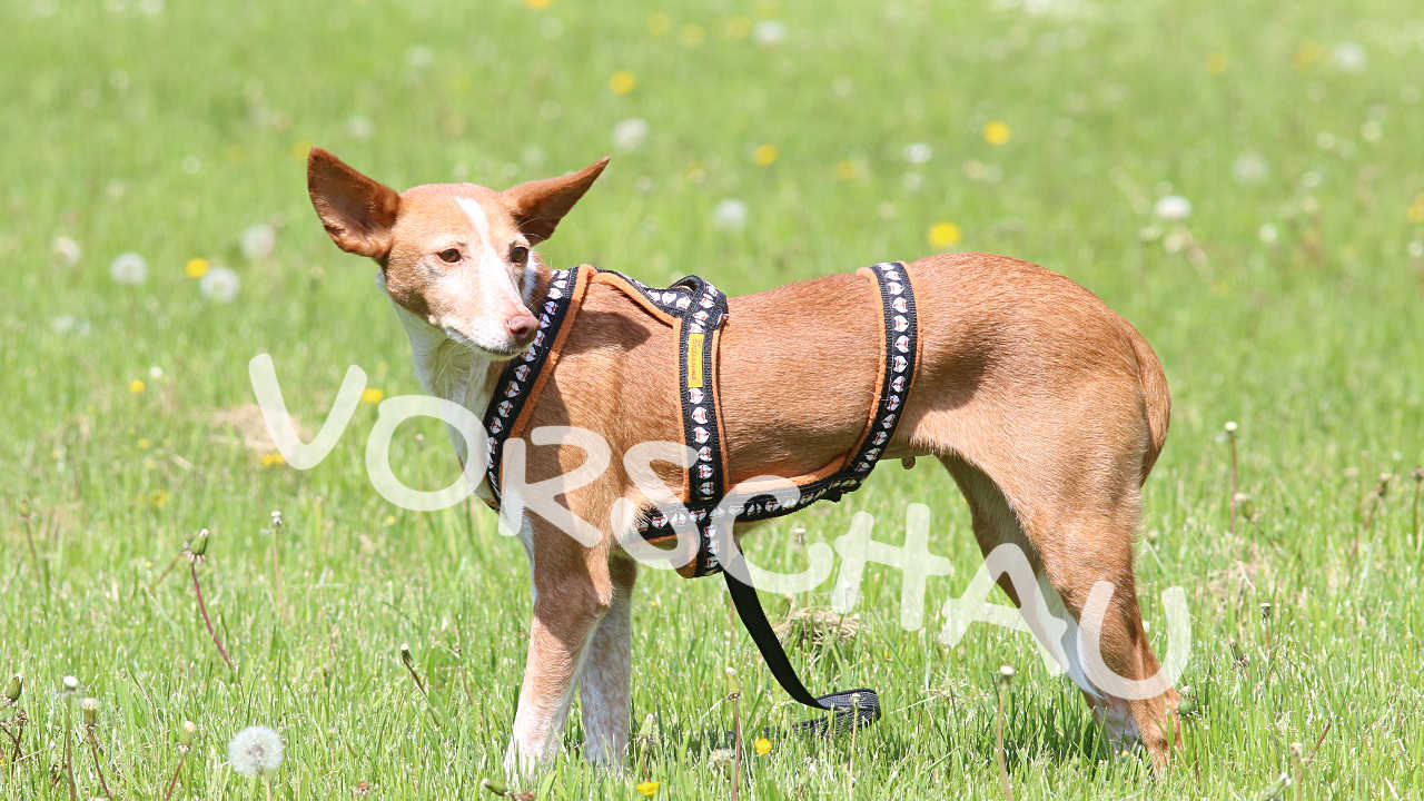 Leben mit Angsthunden - Hey-Fiffi.com
