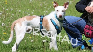 Tierschutzhunde - Hey-Fiffi.com