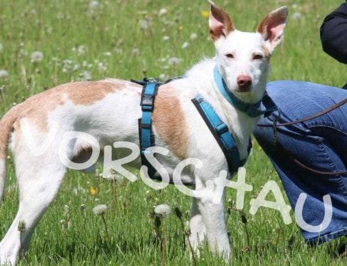Die ersten Tage mit einem Tierschutzhund (Interview)
