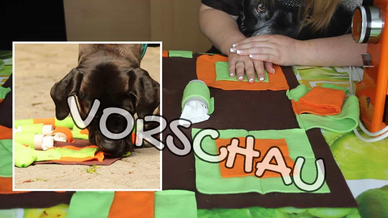 Schnüffeldecke nähen für Hunde - Hey-Fiffi.com