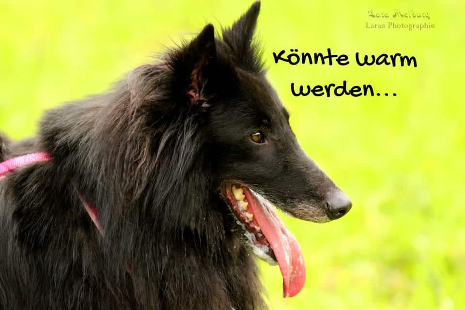 Hechelnder Hund, Lara Meiburg Photographie