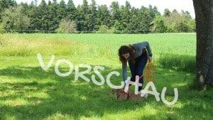 Anleinen und Ableinen von Hunden - Hey-Fiffi.com