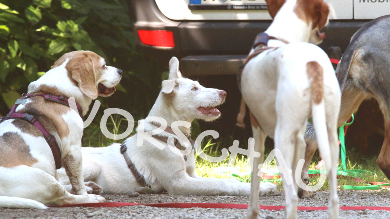 Auto-Ausstieg mit Hunden - Hey-Fiffi.com