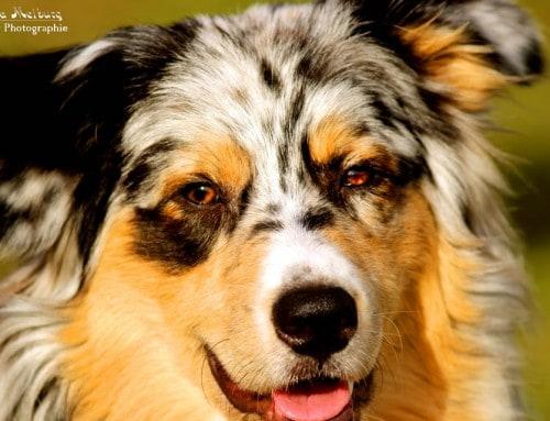 Er hat ein Aua – Der Hund beim Tierarzt