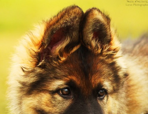 Dein Hund beim Tierarzt