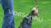 Ballspielen mit Hunden - Hey-Fiffi.com