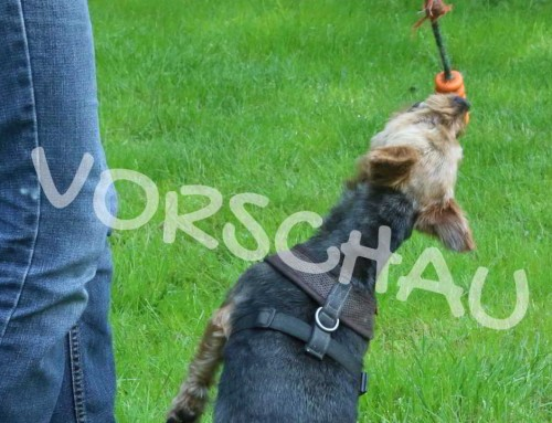 Das ist mein Ball! – Ballspielen mit Hunden, die keinen Ball abgeben möchten