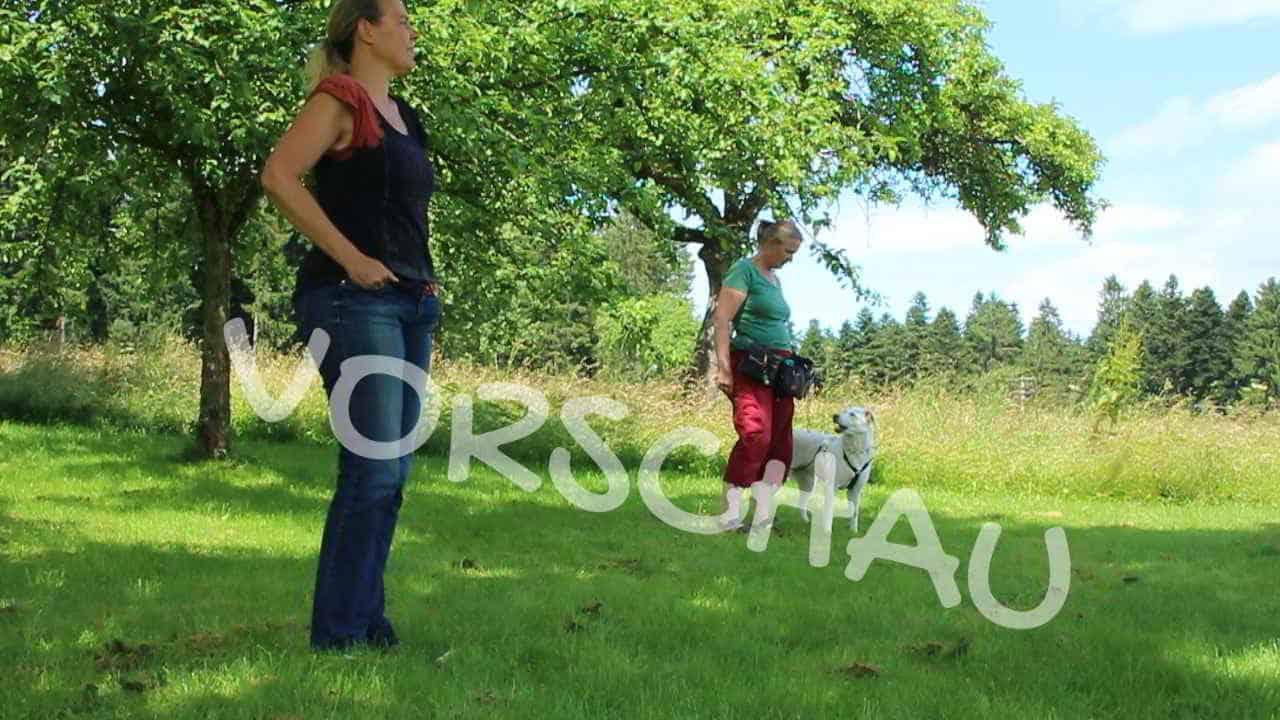 Nur gucken, nicht bellen - Menschentraining für Hunde 1 (Click for Blick) - Hey-Fiffi.com
