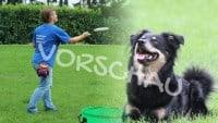 Dog-Frisbee - Einführung, Hey-Fiffi.com