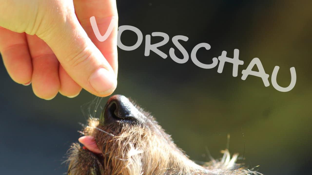 Hunde als Schnappschildkröten - Hey-Fiffi.com