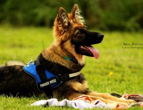 Dein Hund beim Tierarzt 2 – Entspannung