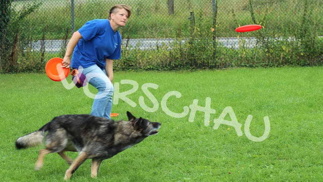 Dog-Frisbee: Fangen und abgeben - Hey-Fiffi.com