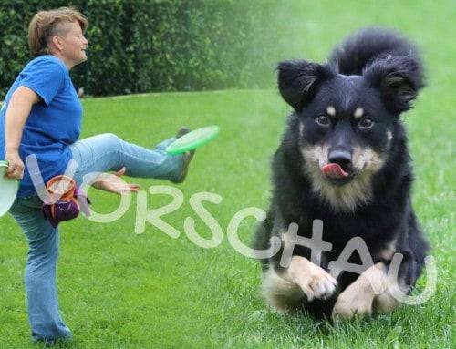 Dog-Frisbee: Heber und Rückhand