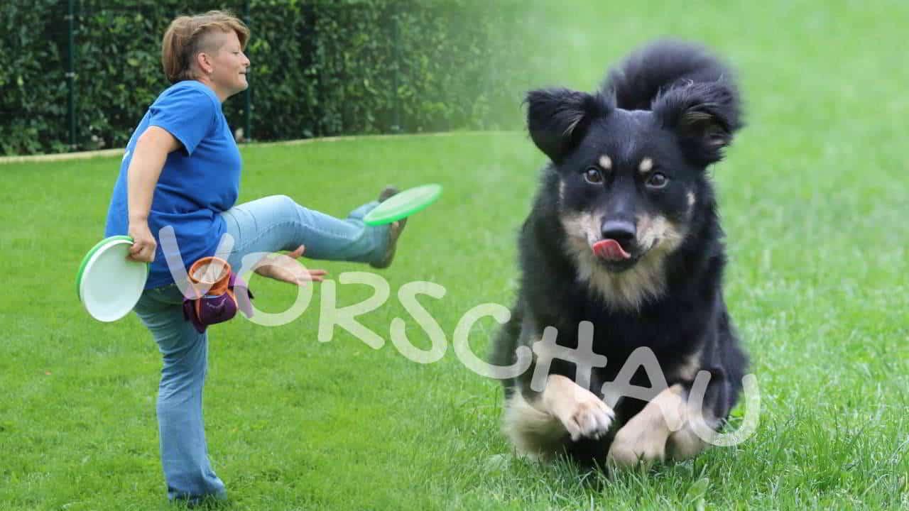 Dog-Frisbee: Heber und Rückhand - Hey-Fiffi.com