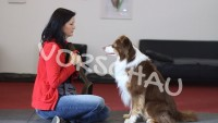 Gewöhnung an das Brustgeschirr für Hunde - Hey-Fiffi.com