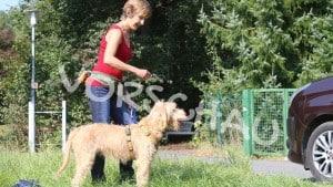 Hilfe, mein Hund jagt Autos - Hey-Fiffi.com