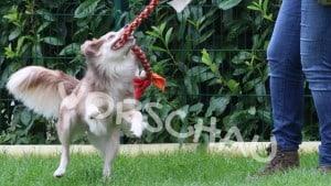 Reizangeltraining für Hunde - Hey-Fiffi.com