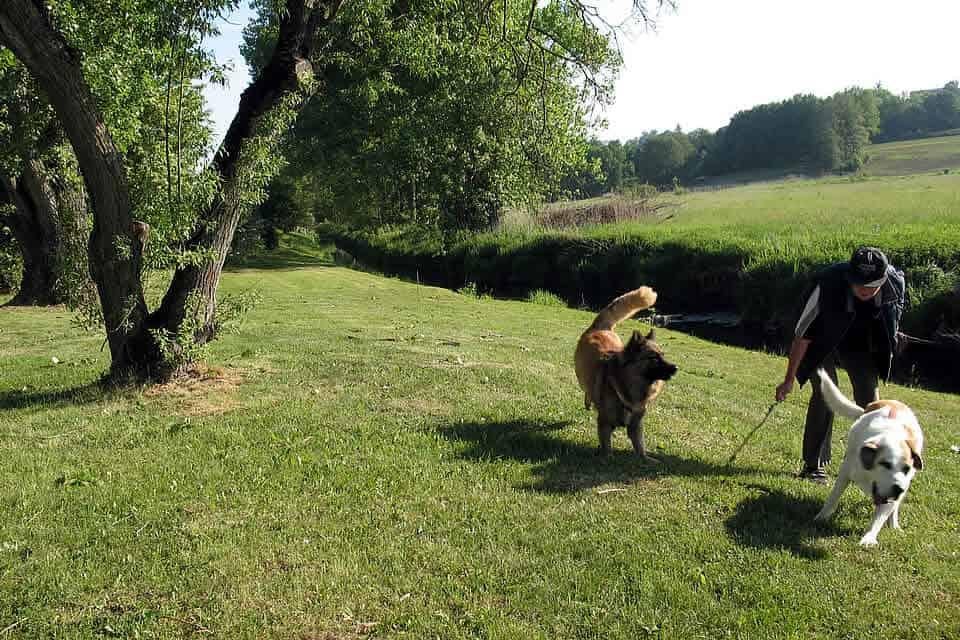 Tierheimhunde Fibel-2