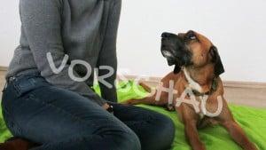 Tierarzt-Knigge für Hunde - Hey-Fiffi.com
