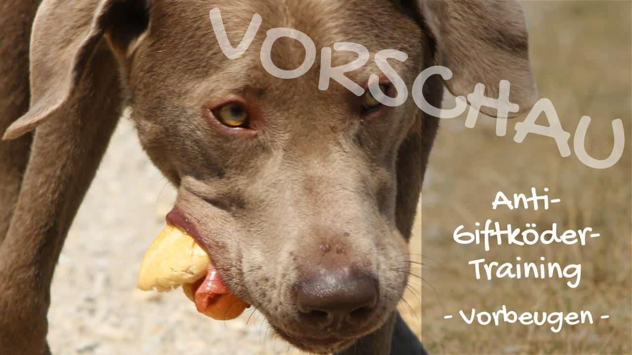 Anti-Giftköder-Training: Vorbeugen - Hey-Fiffi.com
