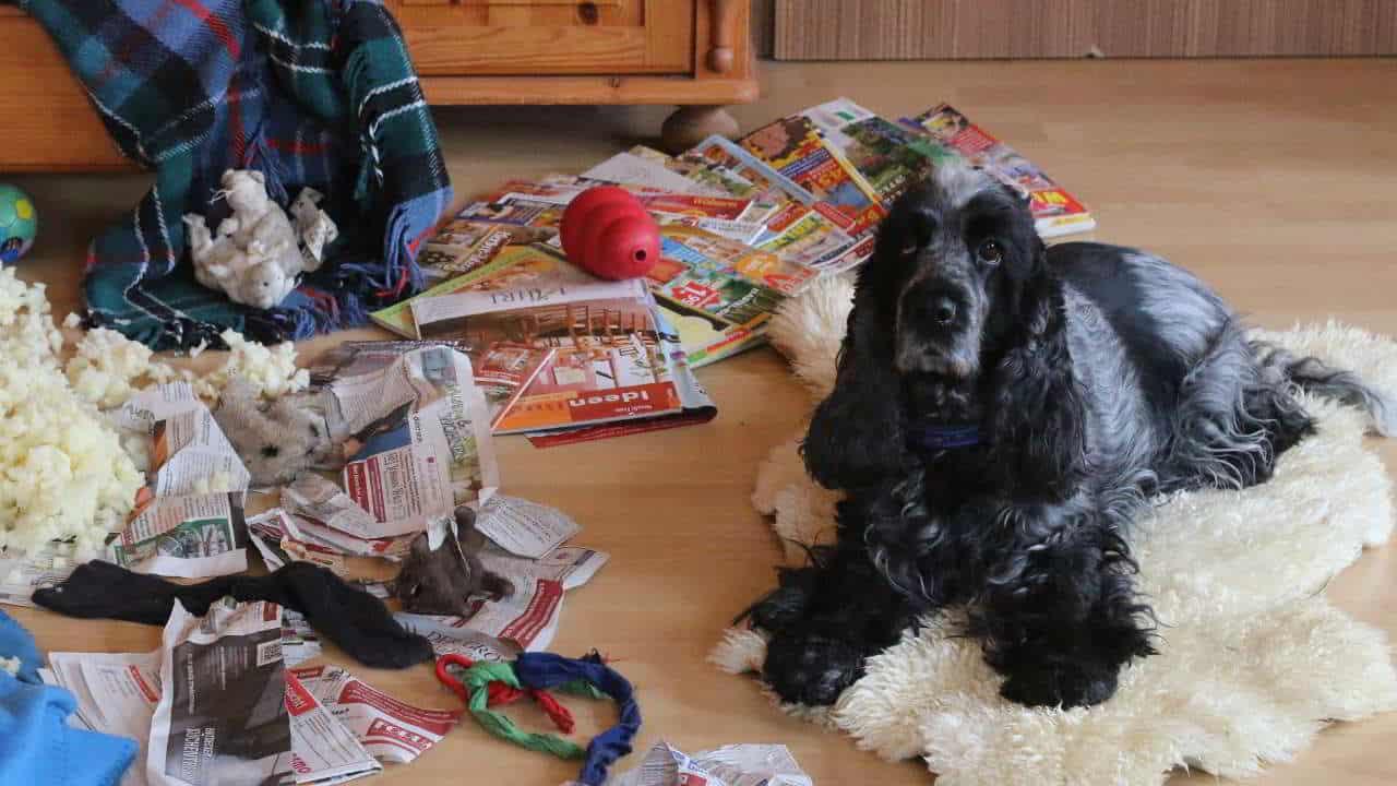 Trennungsstress bei Hunden - Hey-Fiffi.com
