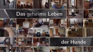 Das geheime Leben der Hunde, SWR Fernsehen, Hey-Fiffi.com