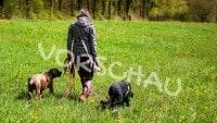 Orndung an der Leine mit zwei Hunden - Hey-Fiffi.com