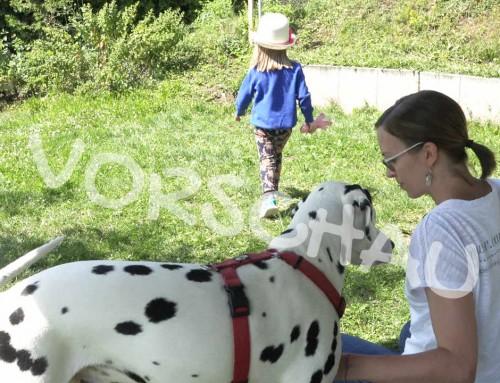 Beschäftigung für Kind und Hund (Suchspiel)