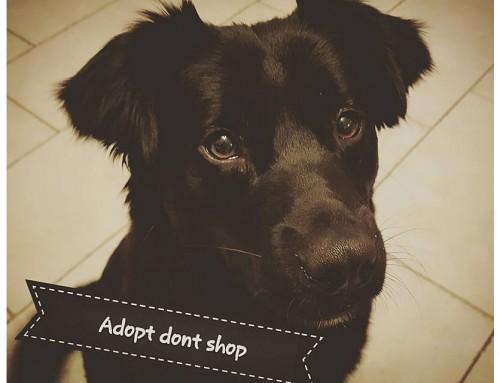 Muss es immer ein Welpe sein? Welcher Hund passt zu dir?
