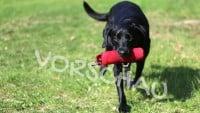 Dummytraining für Hunde, die kleine Suche - Lara Meiburg Photographie