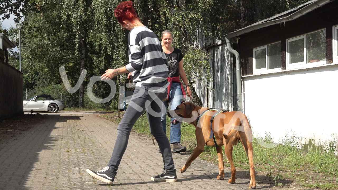 Pendeltraining für Hunde - Hey-Fiffi.com