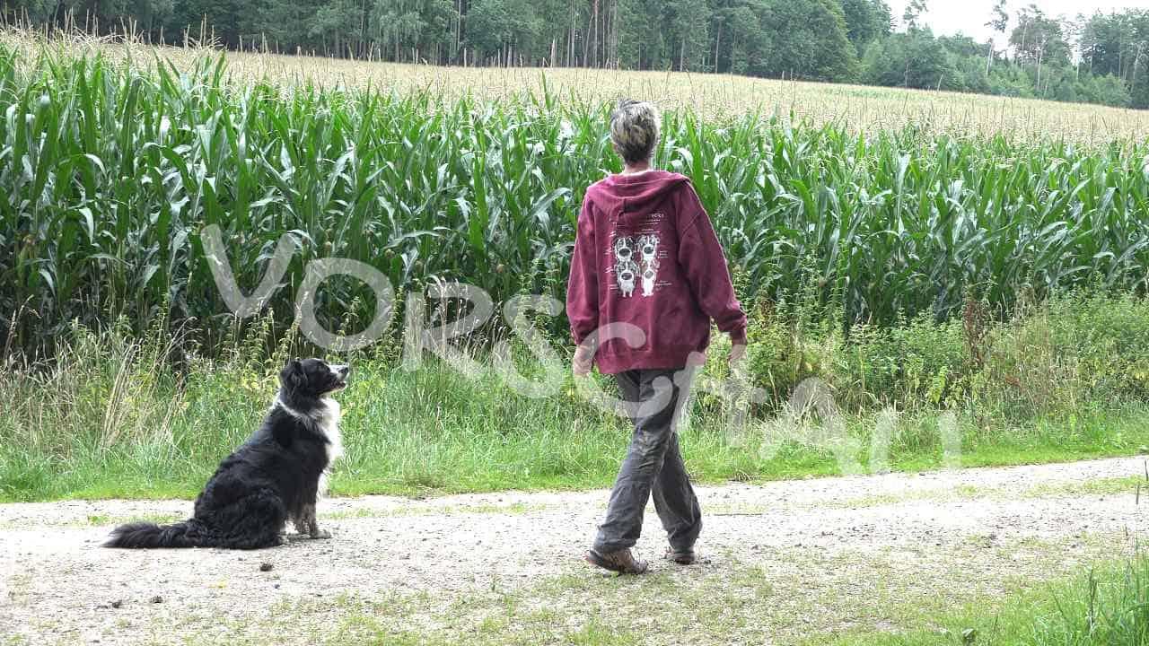 Sitz aus der Bewegung für Hunde - Hey-Fiffi.com