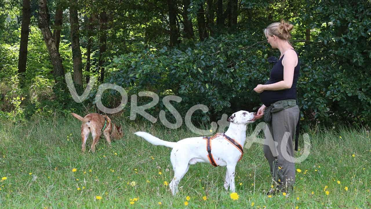 Der tut nix, fremde Hunde beim Spaziergang - Hey-Fiffi.com