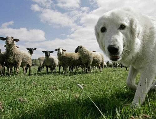 Wildes Deutschland – Dein Hund, der Sofawolf