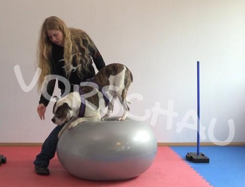 Hundefitness-Physio für die Schultergliedmaßen