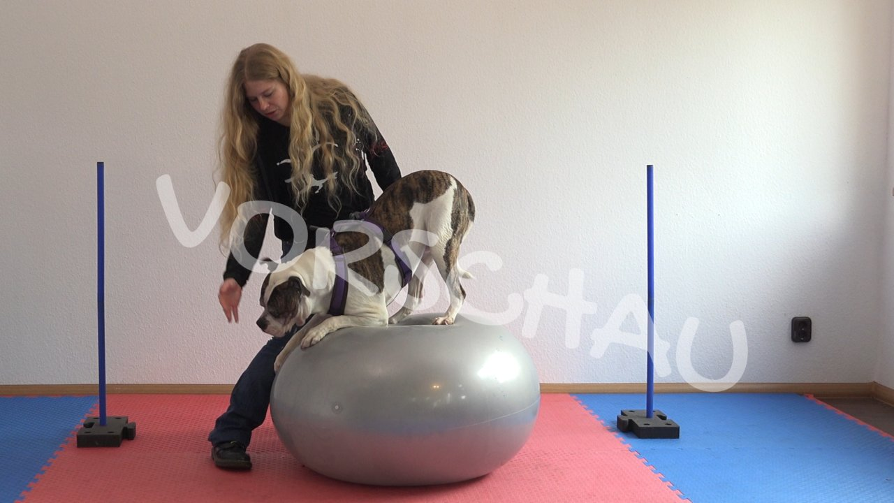Hundefitness-Physio für die Schultergliedmaßen - Hey-Fiffi.com