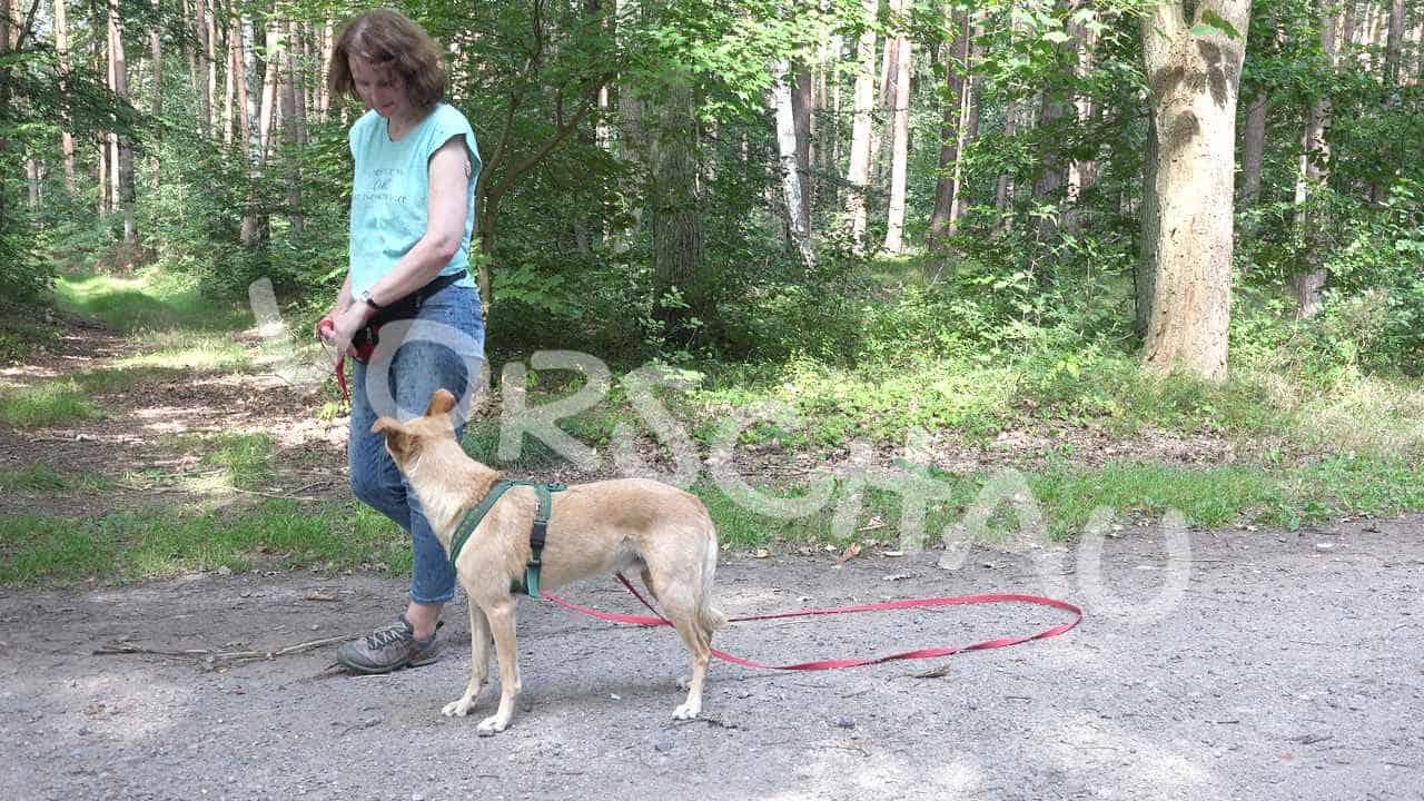 Waldspaziergang mit Hund - Hey-Fiffi.com