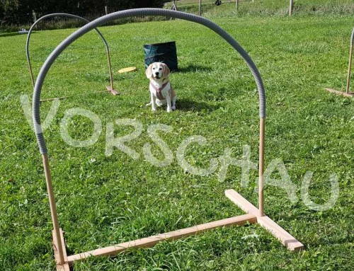 Hoopers-Agility: Umrunden