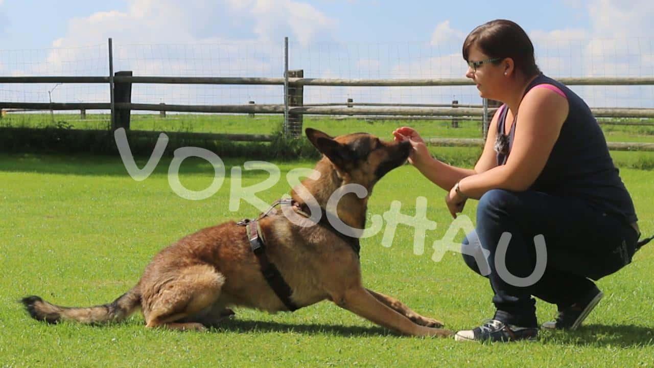 Physio-Übungen für Hunde-Oldies