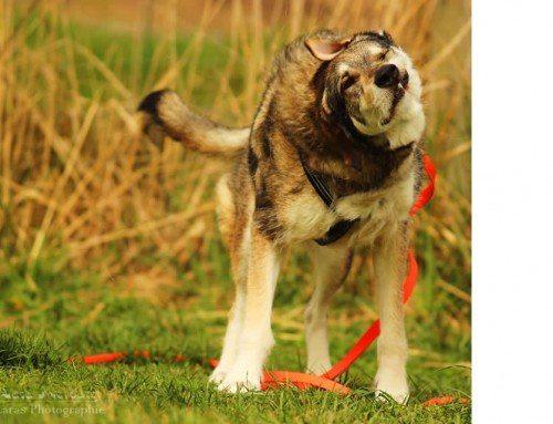 Funktioniert Gewalt im Hundetraining?
