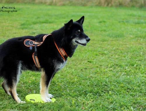 So viele alternative Fak…äh…Verhalten – Welches passt zu deinem Hund?