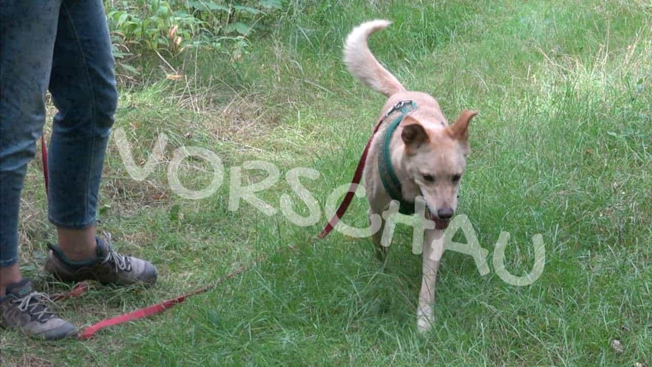 Nasenspiele für Hunde: Dosensuche - Hey-Fiffi.com