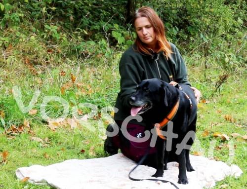 Training für Rühr-mich-nicht-an-Hunde
