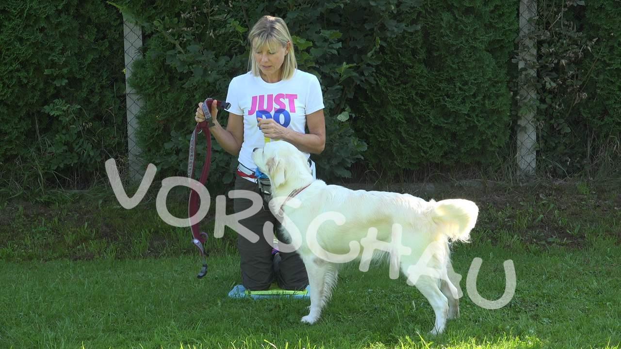 Hunde: Geschirr anziehen - Hey-Fiffi.com