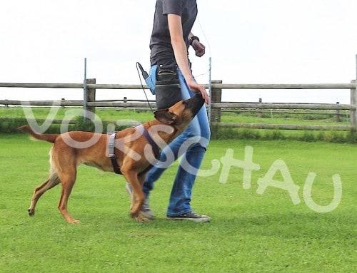 Kleine Hilfe für Hibbelhunde – Die Klebehand